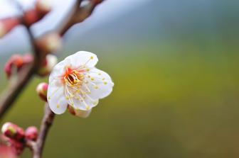 Insider ESL Secrets about Teaching Japanese Learners