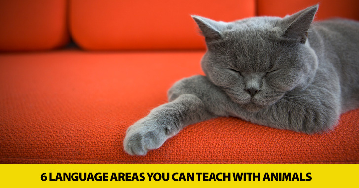 Furry Friends Welcome: 6 Language Areas You Can Teach with Animals